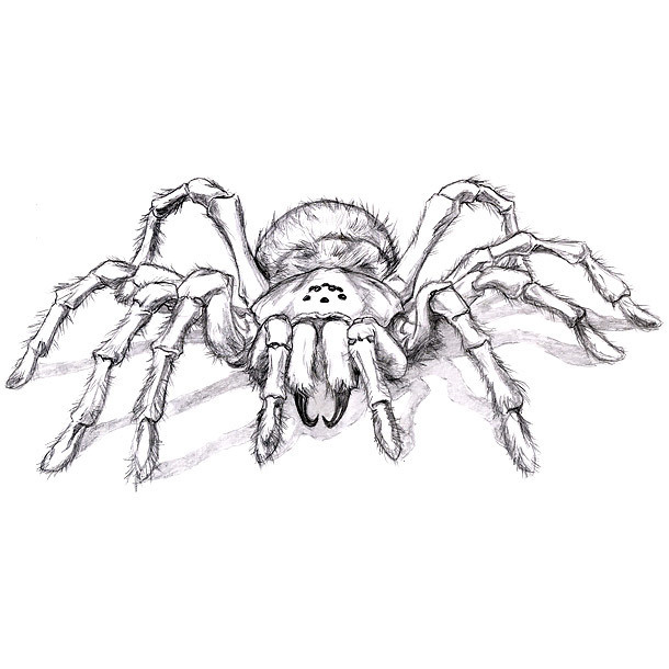 Scary Tarantula Tattoo Design