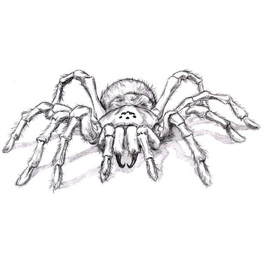 Scary Tarantula Tattoo