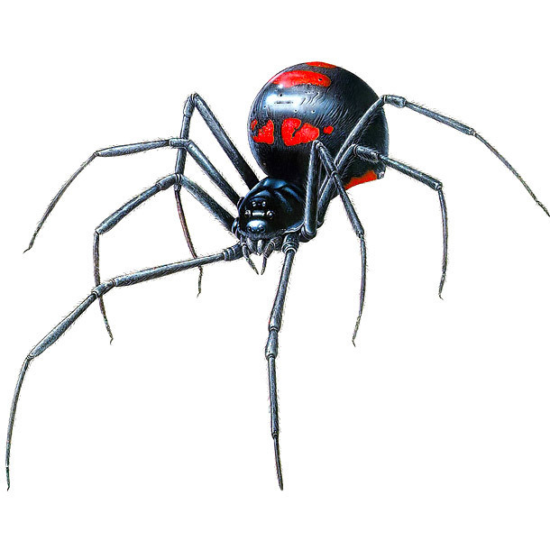Awesome Black Widow Design for Men Tattoo Design