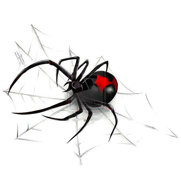Black Widow on Spider Web Tattoo Design