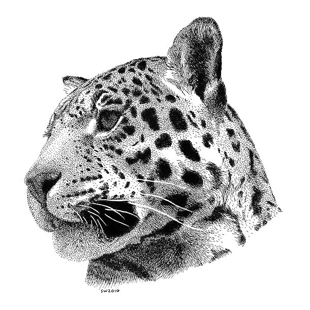 Dotwork Jaguar Tattoo Design
