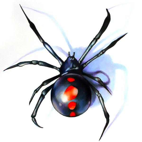 Small Black Widow Tattoo Design