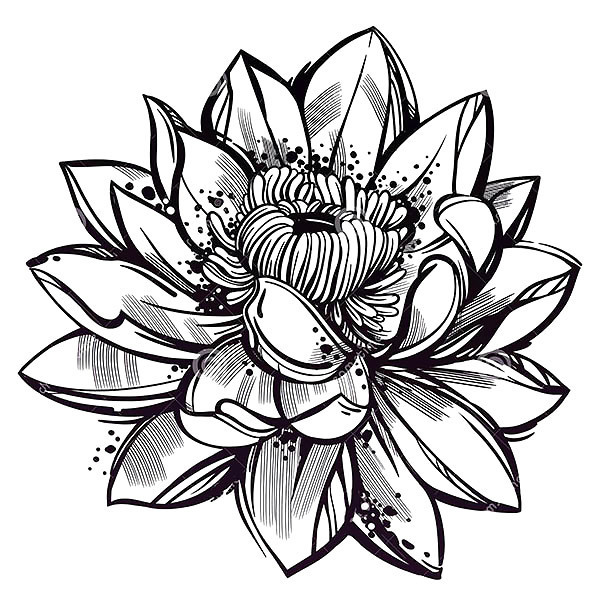 Sketch Style Lotus Flower Tattoo Design