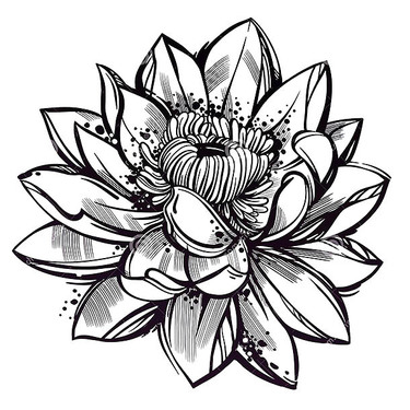 Sketch Style Lotus Flower Tattoo