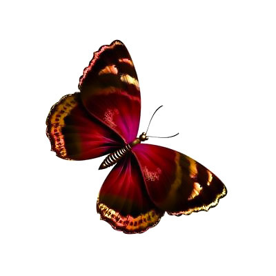 Pretty Colorful Butterfly Tattoo Design