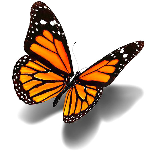 Realistic 3D Monarch Butterfly Tattoo Design